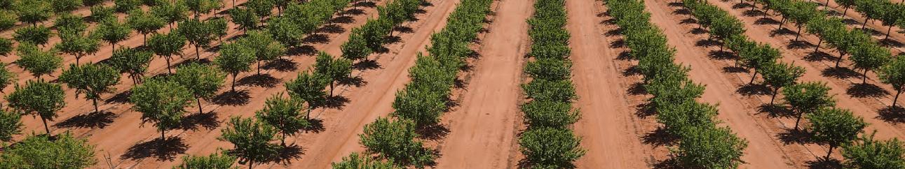 PRIMEWEST Moora Almond Orchard Hillston NSW